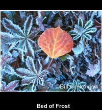 Bed of Frost