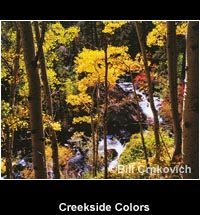 Creekside Colors